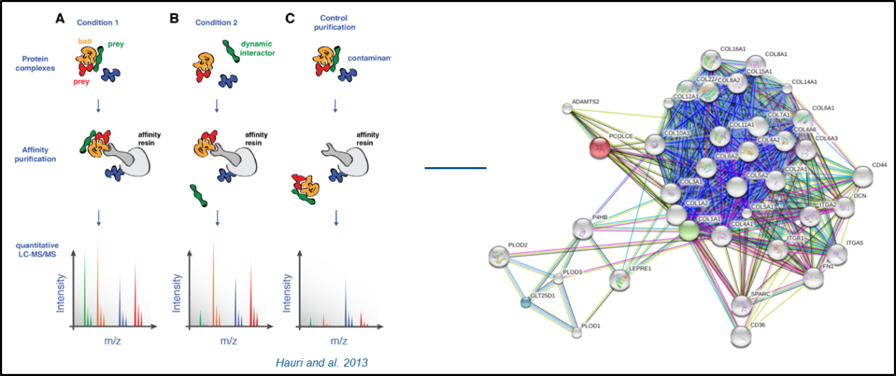 Scheme: Quantitative mass spectrometry in interaction proteomics