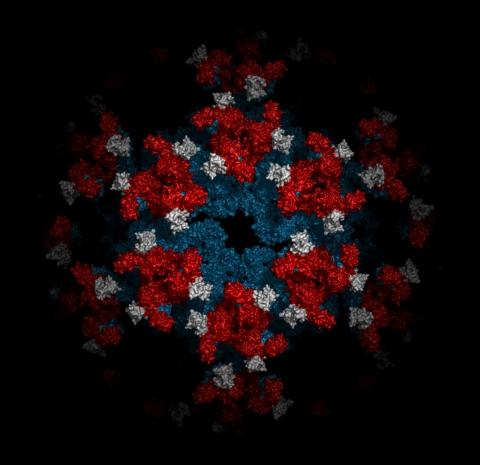chik-virus_surface.jpg