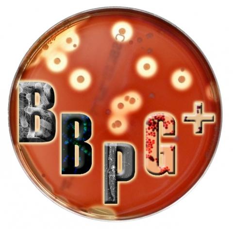 image_bbpg.jpg