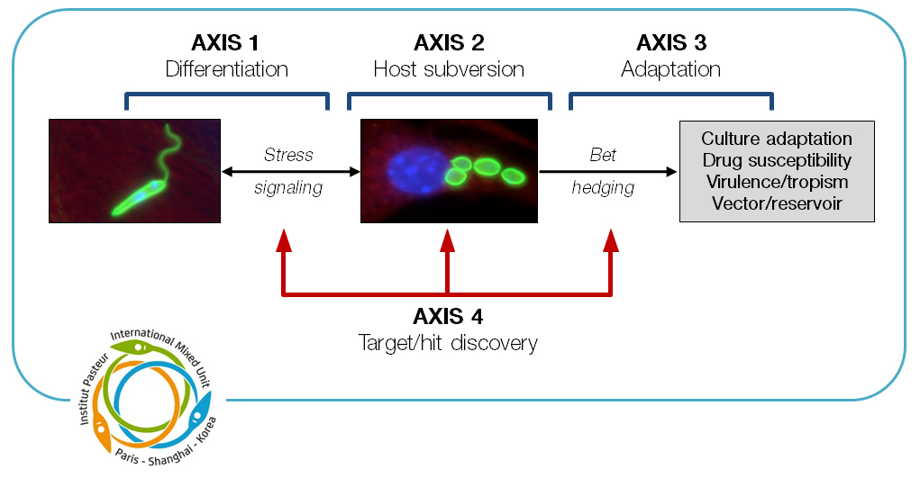 Lab axis