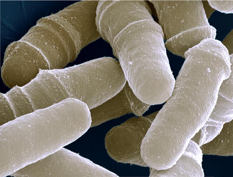 Benoit Arcangioli Schizosaccharomyces Organisms And