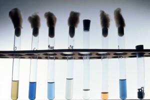 Galerie de sucres mis en présence de bactéries Salmonelles. Fermentation de sucres.