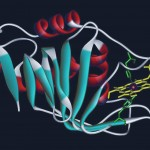 Structure cristalline de l'hémophore HasA de Serratia marcescens. Les hélices alpha sont colorées en rouge et les brins bêta en bleu. La molécule d'héme est colorée en jaune et les chaînes latérales des acides aminés ligands de l'hème sont colorées en vert.