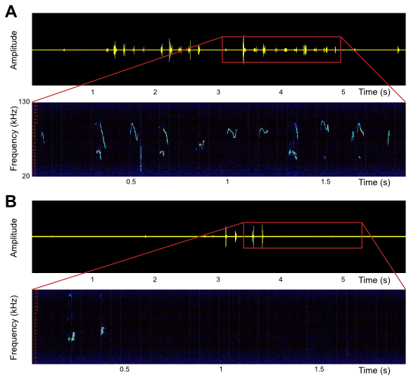 Figure 2: A: Ultrasonic vocalizations emitted by an adult female wild-type mouse. B. Ultrasonic vocalizations emitted by an adult female Shank2-/- mouse.