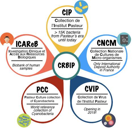 Mery Piña - Biological Resource Center of Institut Pasteur (CRBIP