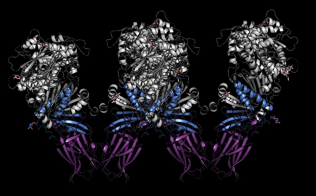 HHV-8 gH/gL (grey and blue) bound to cellular receptor (purple)