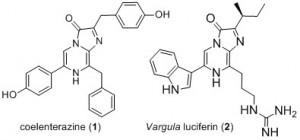 Coelenterazine et Varguline