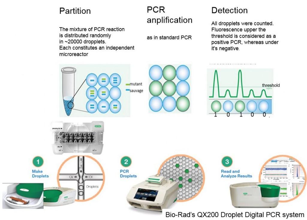 digital PCR Biorad QX200 Batsche