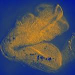 Cellules dans un embryon de souris