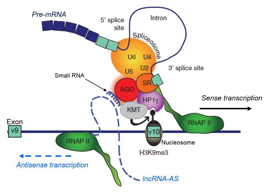 antisense lncRNA Argonaute Batsche