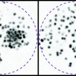 Time lapse video microcopy of Neisseria meningitidis aggregates
