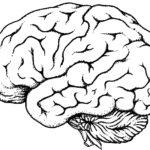 Brain Clipart #1859
