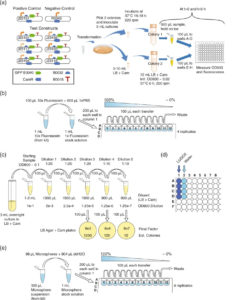 Robust Cell Count calibration silica beads Pasteur_Paris 2018